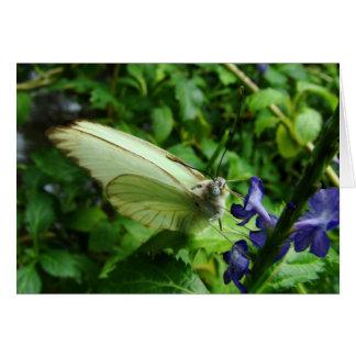 farfalla bianca card