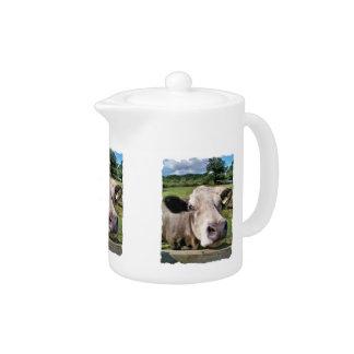 FARM ANIMALS, CUTE COW