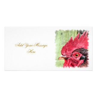 FARM ANIMALS, ROOSTER PICTURE CARD