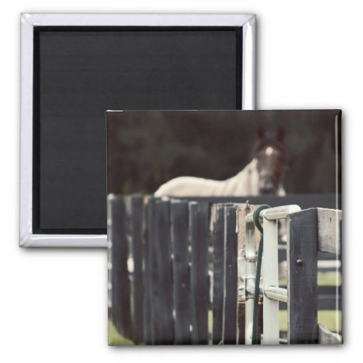farm fence with horse behind sepia magnet