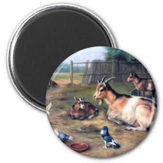 Farm Goat Kids Pigeons Magnets