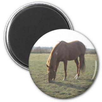 Farm Horse Grazing 6 Cm Round Magnet