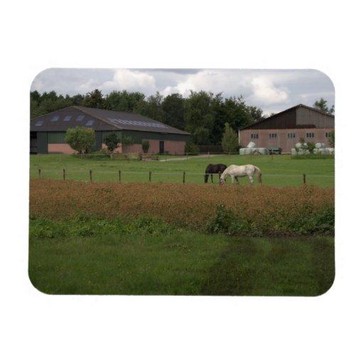 Farm in Drenthe Magnet
