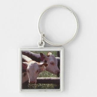 Farm Livestock Silver-Colored Square Key Ring