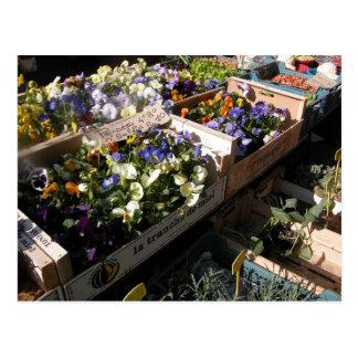 Farmer's market, Louans, Bresse,  pansies Postcard