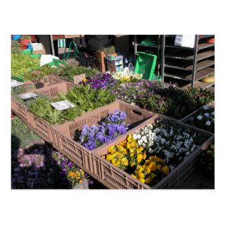 Farmer's market, Louans, Bresse, plants Postcard
