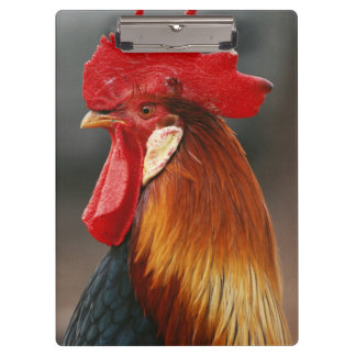 Farmyard Domestic Rooster Clipboard