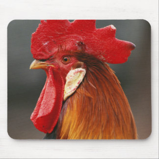 Farmyard Domestic Rooster Mouse Mat