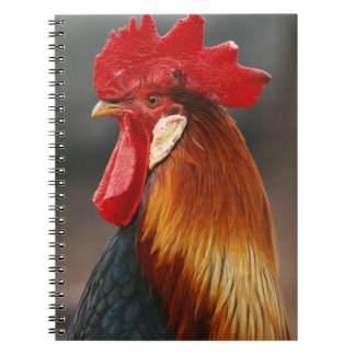 Farmyard Domestic Rooster Notebooks