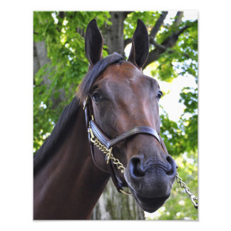 Fasig Tipton Yearling Auctions Photograph