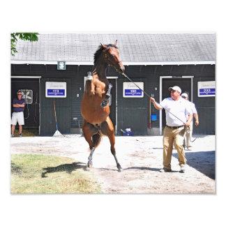 Fasig Tipton Yearling Sales Photo Print