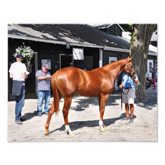 Fasig Tipton Yearling Sales Photograph