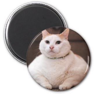 Fat Cat 6 Cm Round Magnet