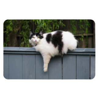 Fat Cat On Fence Magnet
