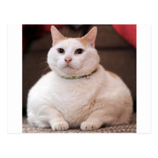 Fat Cat Post Cards