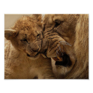 Father And Son Lion Poster