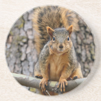 Faux fox squirrel sandstone coaster