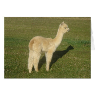 Fawn alpaca greeting card