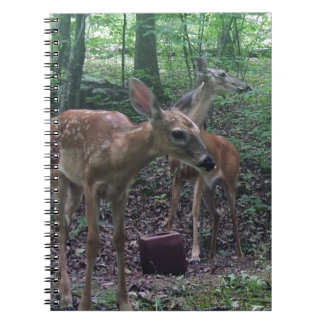 Fawn and Momma Journal