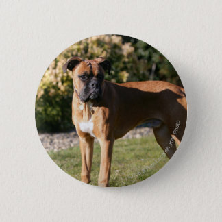 Fawn Boxer Dog Standing 6 Cm Round Badge