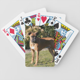 Fawn Boxer Dog Standing Bicycle Playing Cards