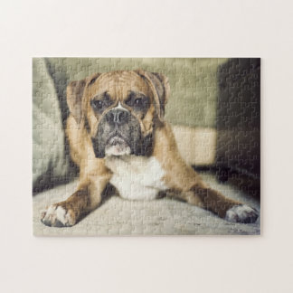 Fawn boxer pup laying down. jigsaw puzzle