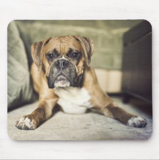 Fawn boxer pup laying down. mouse pad