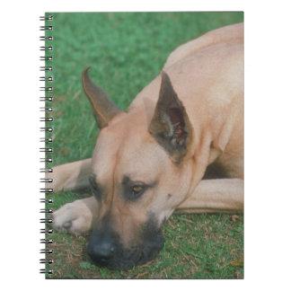 Fawn Great Dane Dog Notebook