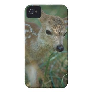 Fawn in Grass Case-Mate iPhone 4 Case