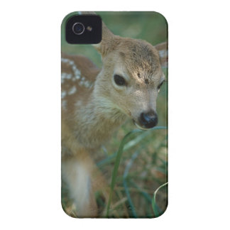 Fawn in Grass Case-Mate iPhone 4 Cases