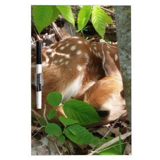 Fawn in the Woods Dry-Erase Whiteboards