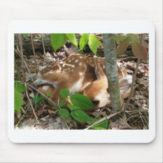 Fawn in the Woods Mousepads