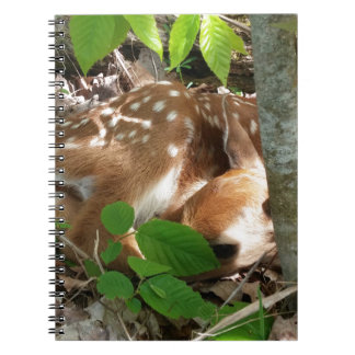 Fawn in the Woods Spiral Notebooks