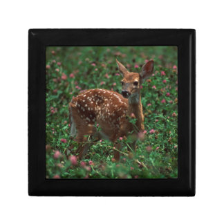 Fawn.jpg Small Square Gift Box