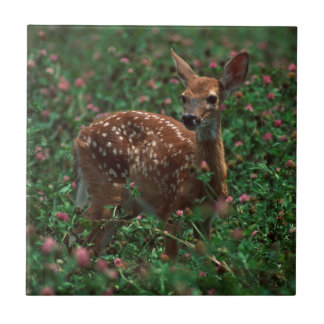 Fawn.jpg Small Square Tile