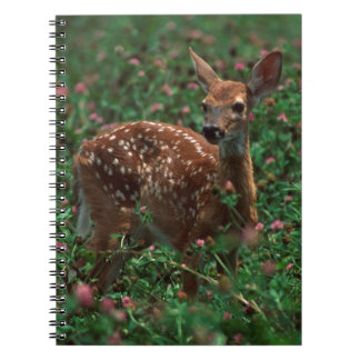 Fawn.jpg Spiral Note Book