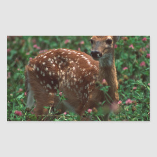 Fawn.jpg Rectangle Stickers