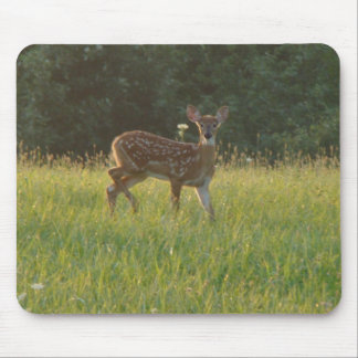 Fawn Looking at Me Mouse Pads