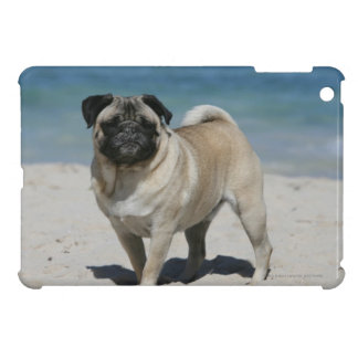 Fawn Pug at the Beach Cover For The iPad Mini