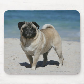 Fawn Pug at the Beach Mouse Pad