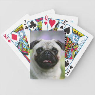 Fawn Pug on Alert Bicycle Playing Cards
