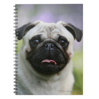 Fawn Pug on Alert Notebooks