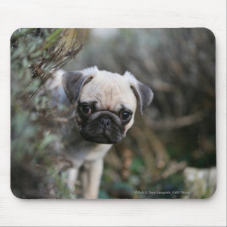 Fawn Pug Puppy Headshot Mouse Pad