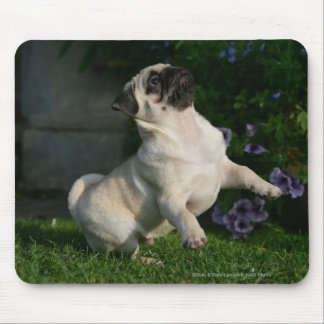 Fawn Pug Puppy Mouse Pad