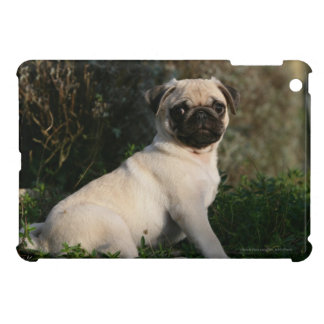 Fawn Pug Puppy Sitting Case For The iPad Mini