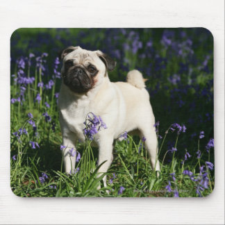 Fawn Pug Standing in the Bluebells Mouse Pad