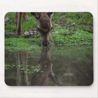 Fawn Reflection in Water Mouse Mat