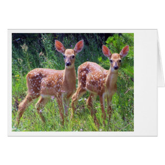 Fawn Twins in the Hawkweed Card