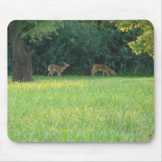 Fawns and Evening Sunlight Mouse Pad