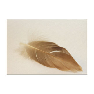 Feather-easily Canvas Prints